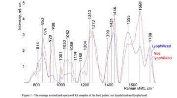 Figure 1 - The average normalized spectra of RS samples of the hard palate: not lyophilized and lyophylized
